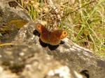 een van de vele vlinders tijdens de wandeling