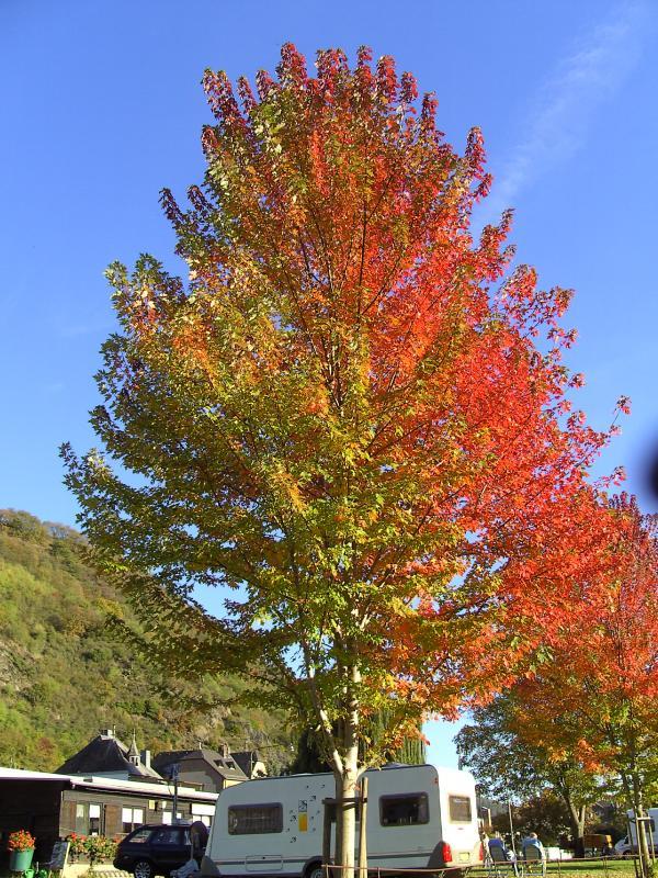 Camping bij Lorely, met mooie herfstkleuren